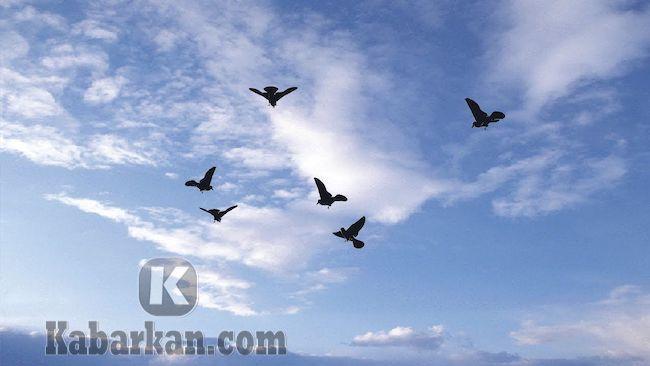 Tafsir menangkap burung lalu lepas lagi