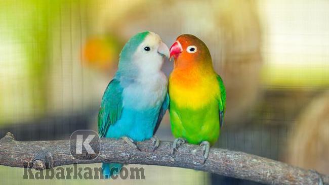 Tafsir menangkap seekor burung saat sudah menikah
