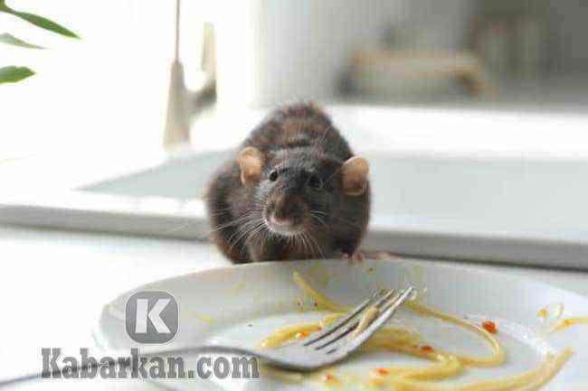 Tafsir mengusir tikus