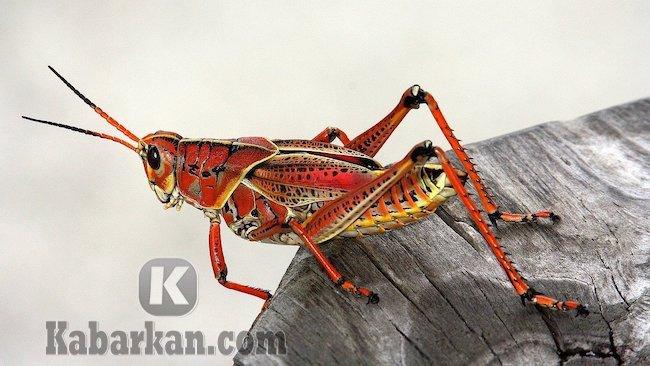 Tafsir mimpi ketakutan saat melihat belalang